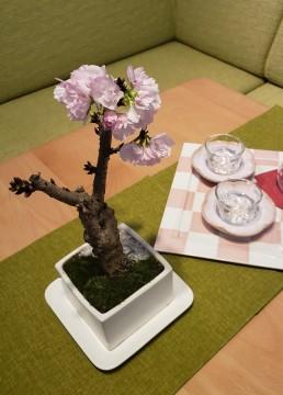 ミニ盆栽のイメージ