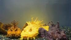 サンシャイン水族館「生き物たちの不思議」水槽にて展示