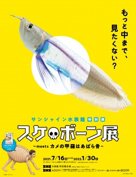 "© Satoshi Kawasaki SB Creative New World ""Transparent Specimen"" Iori Tomita"
